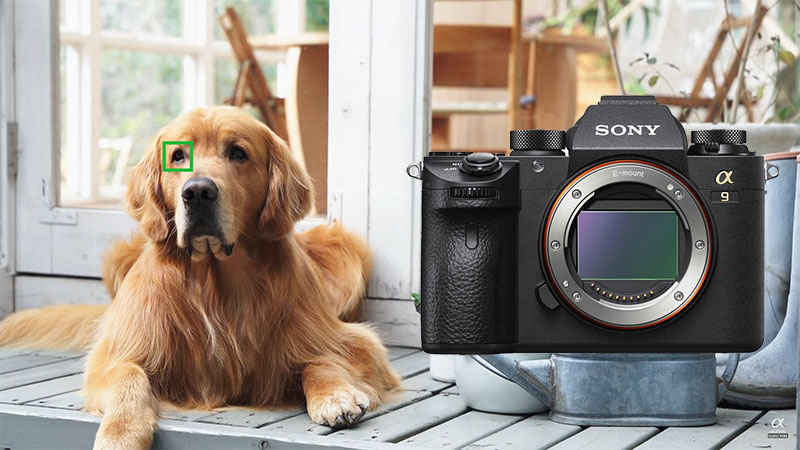 Обновление прошивки для Sony A9: Animal Eye AF, таймер для интервальной съемки и многое другое